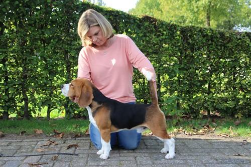 beagle1109