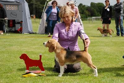 beagle024